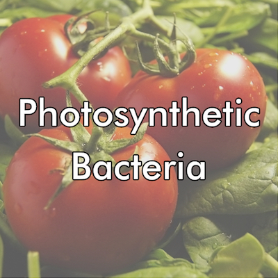 Industry - Photosynthetic Bacteria